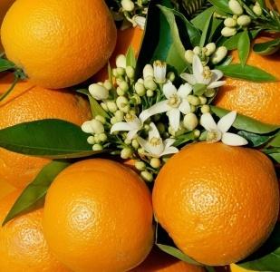 Naranja-03