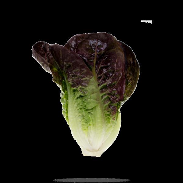 lechuga miniromana bicolor