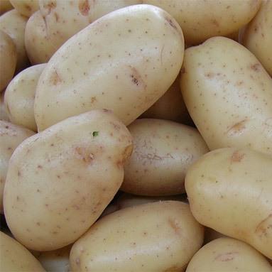patata_blanca-03