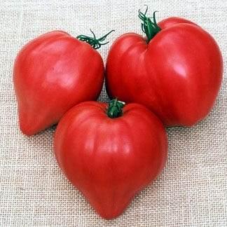 tomate-corazon-de-buey
