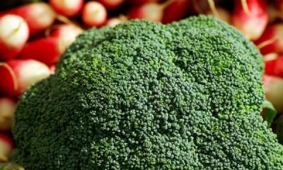 huerto en enero: brócoli