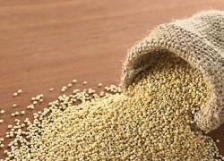 quinoa propiedades
