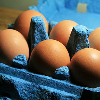 huevos bgue