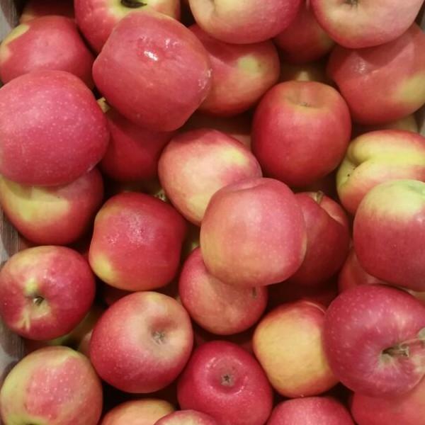 manzana sagarrosa
